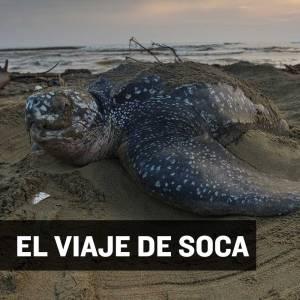 VIAJE-SOCA